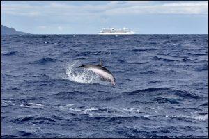 L'île de Madère. Sortie en zodiac à la rencontre des dauphins. (Photo Sergine Laloux)