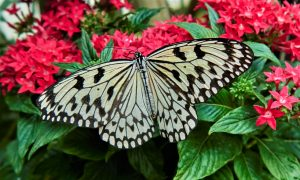 Europe; France; Department of Alsace; High-Rhine; Village of Hunawihr;The Butterfly Garden; Close-Up Of Butterfly On red Flower