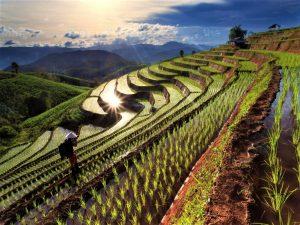 Thailande-Les-champs-de-riz-en-terrasses-a-chiang-mai-thailande