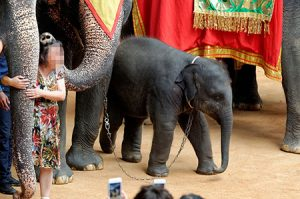 elephant_ride-1