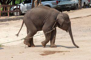 elephant_ride-2