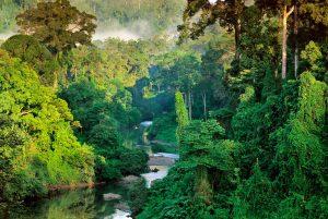 sarawak-Borneo-forest