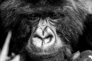 Bisate Lodge, Wilderness Safari, Rwanda PHOTOGRAPHER: David Crookes