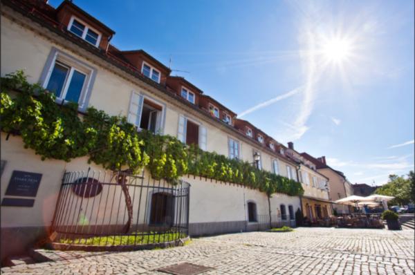 La ville Slovène de Maribor célèbre la plus ancienne vigne du monde