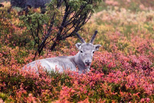 Parcourir la Laponie finlandaise: dans les pas du héros du film