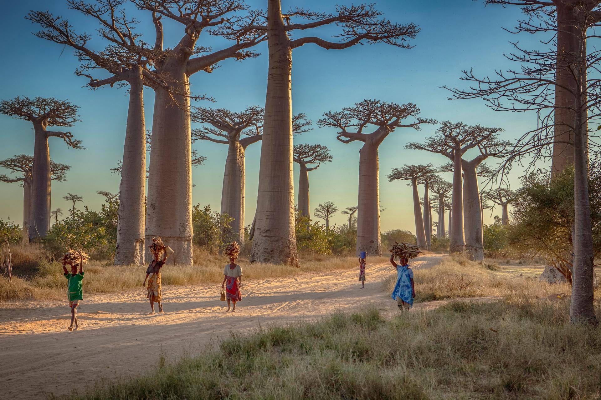 Peste à Madagascar