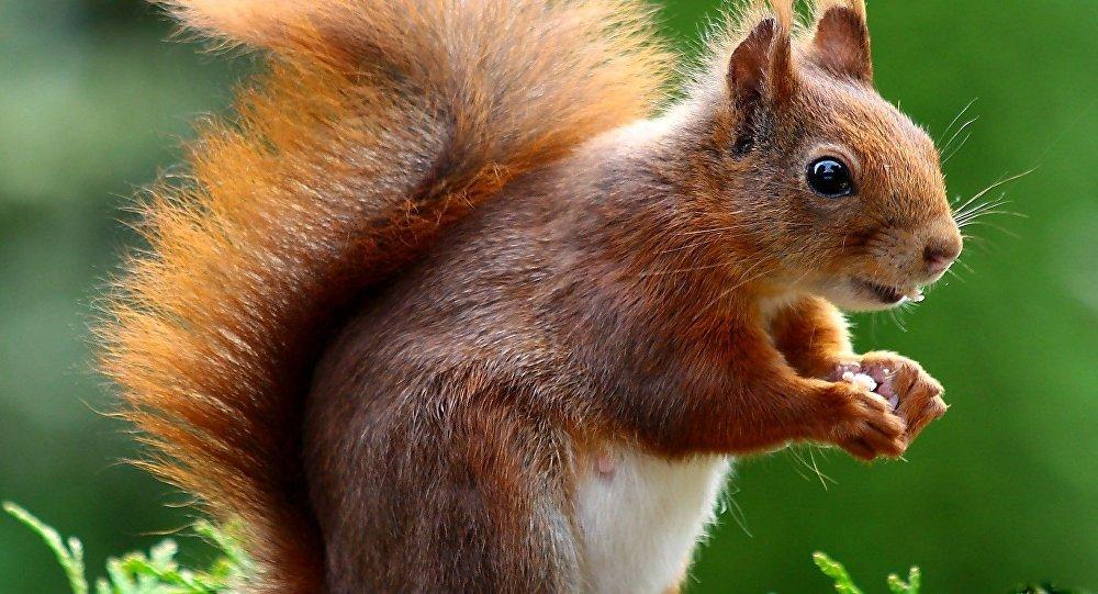 Image Écureuil un avion évacué à cause… d'un écureuil ! | pagtour