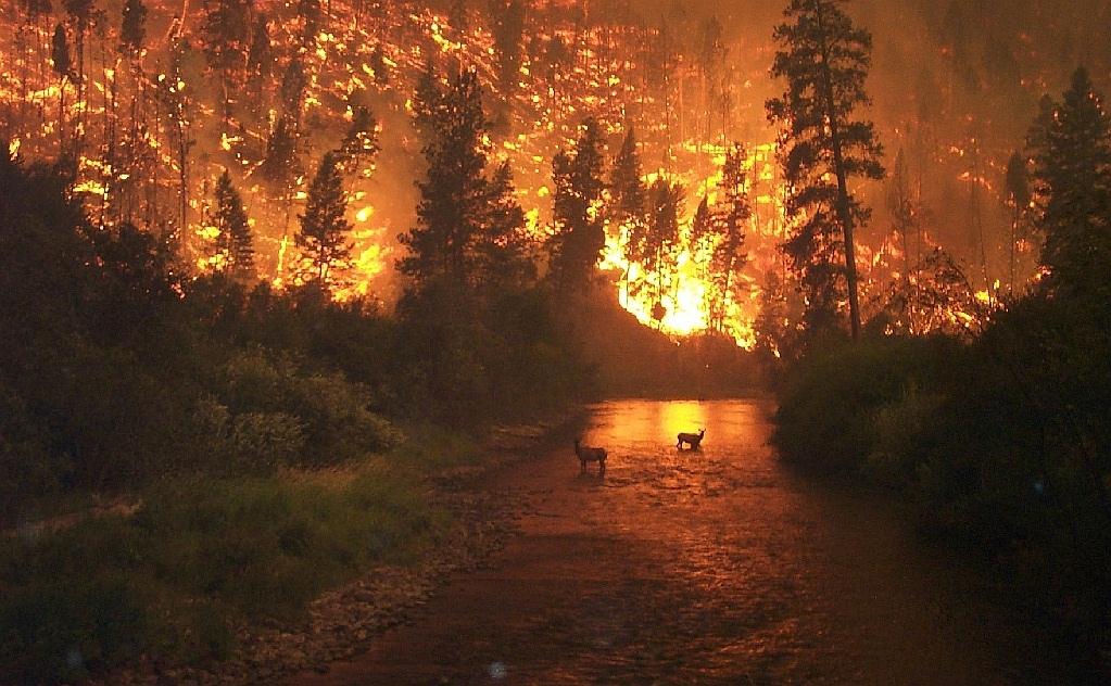 """Résultat de recherche d'images pour """"incendie pagtour"""""""